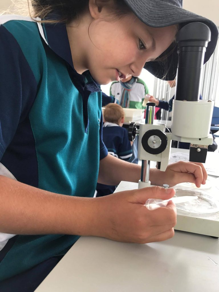 Year 4 Currency Creek EcoCentre Adventure….