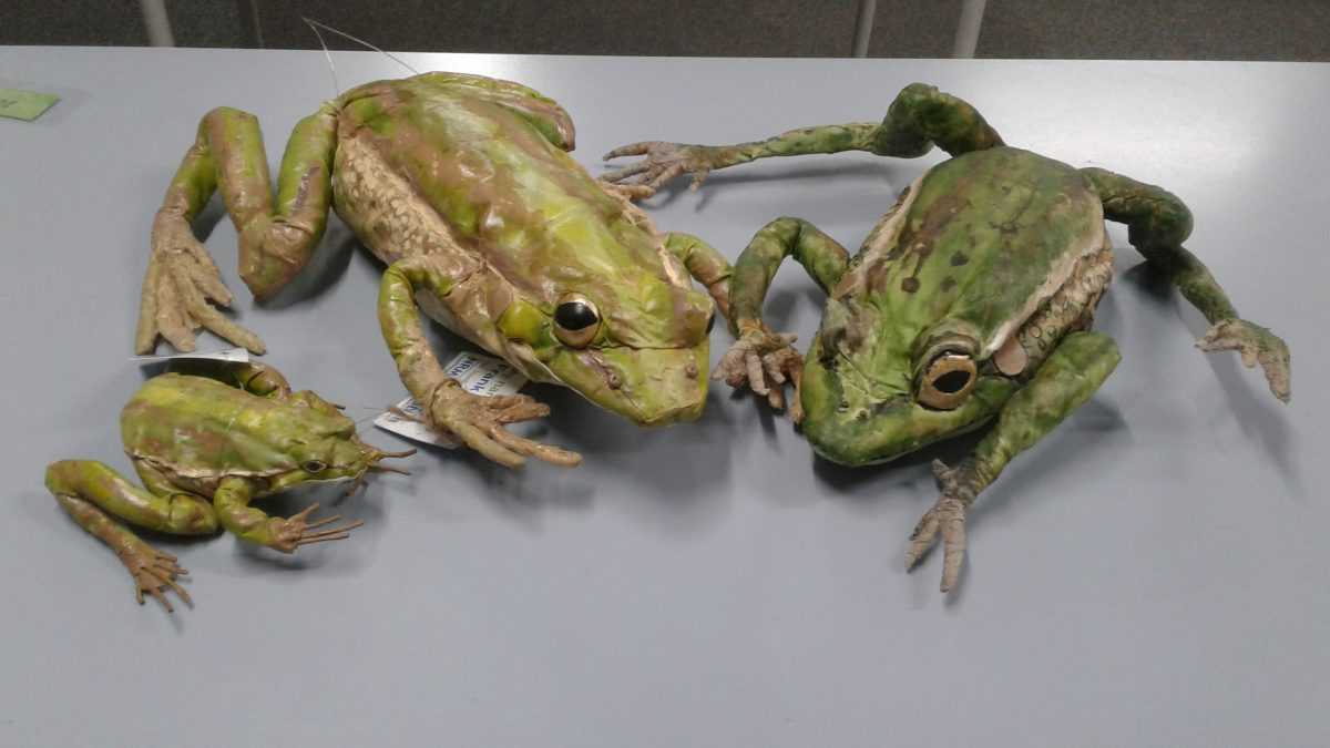 Year 4 EcoCentre | Southern Bell Frog Project | 2020