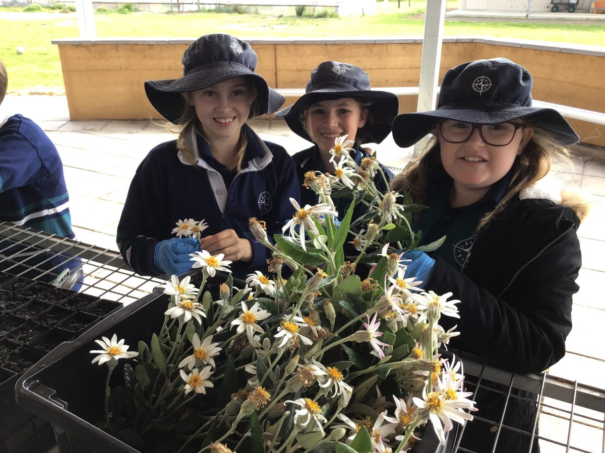Year 4 EcoCentre | SEEDS Project – Saving Endemic and Endangered Species | 2020